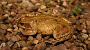 How Do Frogs Protect Themselves?