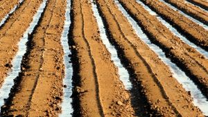 What is furrow irrigation?