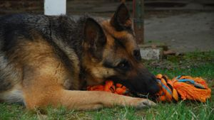What Are Some German Shepherd Games?