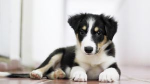What Are Some Good Puppy Names for Girls?