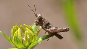 Where Do Grasshoppers Live?
