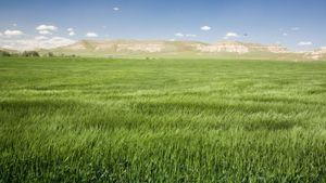 What Is a Grassland Ecosystem?
