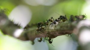 What Is a Group of Ants Called?