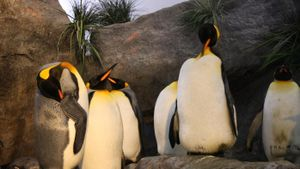 What Is the Habitat of a King Penguin?