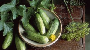 What Is a Half-Sour Pickle?