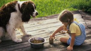 What are the healthiest dog food brands?