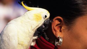 How Do Parrots Talk?