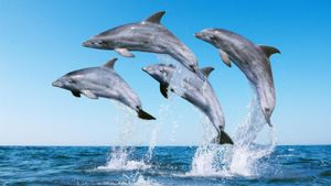 How does a dolphin protect itself?