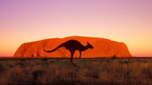 How Fast Can a Kangaroo Run?