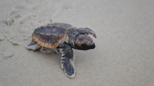 How Long Do Turtle Eggs Take to Hatch?