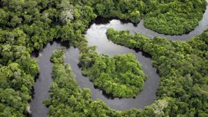 How Much Rainforest Is Cut Down Each Day?