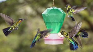 How Do You Make Hummingbird Food?