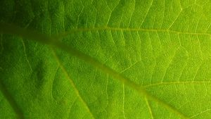 What is the importance of photosynthesis in life?