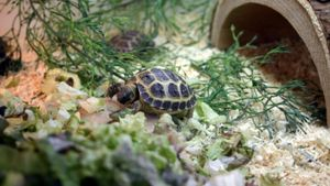 What is included in a complete turtle habitat kit?
