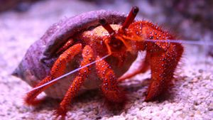 What is included in a typical hermit crab kit?