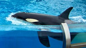 Do Killer Whales Kill People?