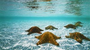 What Are the Kingdom, Phylum, Class and Order of the Starfish?