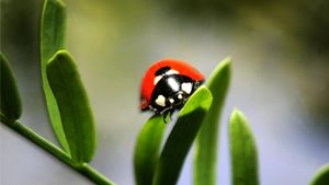 What Does a Ladybug Tattoo Symbolize?