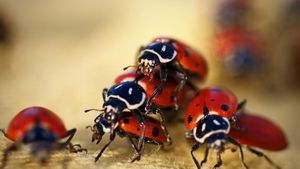 Where Do Ladybugs Live?