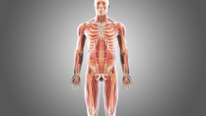 What Is the Largest Bone in the Human Body?