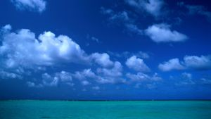 What Is the Largest Sea in the World?
