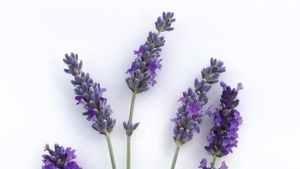 What Does Lavender Smell Like?