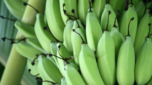 How Long Does It Take for Bananas to Ripen?