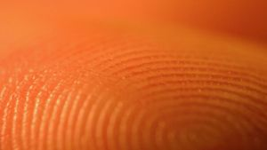 How Long Do Fingerprints Last?