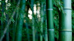 How Long Does It Take to Grow Bamboo?