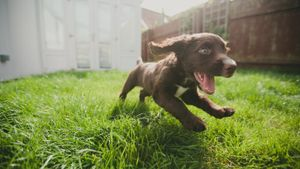 How Long Does It Take a Puppy to Become Fully Grown?
