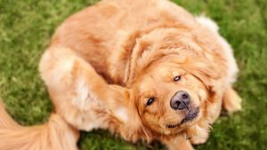 How long does it take to get rid of fleas?