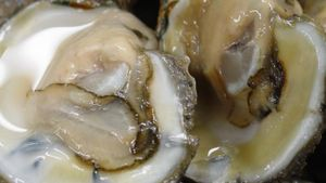 How Long Do Shucked Oysters Last?