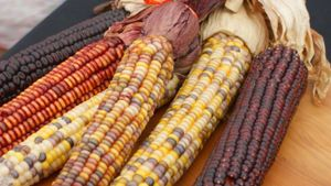 What Is Maize?