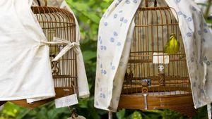 How Do You Make a Bird Cage Cover?
