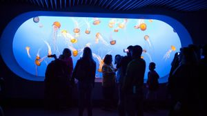How Do You Make a Jellyfish Tank?