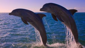 How Many Dolphins Are Left in the World?