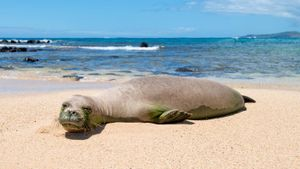 What are some facts about the monk seal?