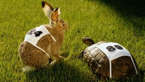 What is the moral lesson of the story about the rabbit and turtle race?