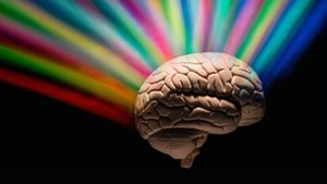 How Much of the Brain Do People Use?