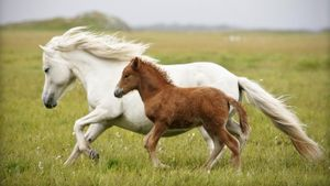 What is the name of a baby horse?