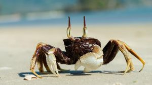 What Do Ocean Crabs Eat?