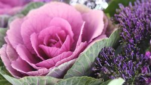What Is an Ornamental Cabbage?