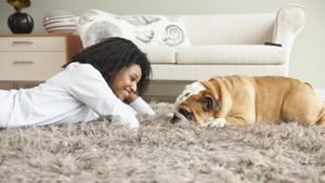 How Do You Get Pet Urine and Smells Out of Carpet With a Steam Cleaner?