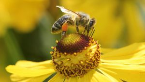 What plants attract bees?