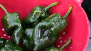 What Does a Poblano Pepper Look Like?