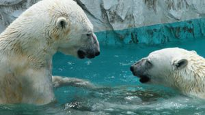 Do polar bears live in the North Pole?