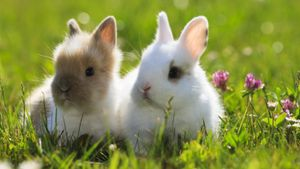What Is Proper Care for Dwarf Rabbits?
