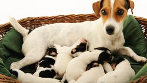 When Do Puppies Stop Nursing?