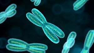 What Is the Purpose of Chromosomes?