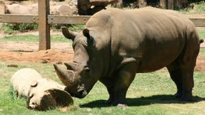 Why Do Rhinos Have Thick Skin?